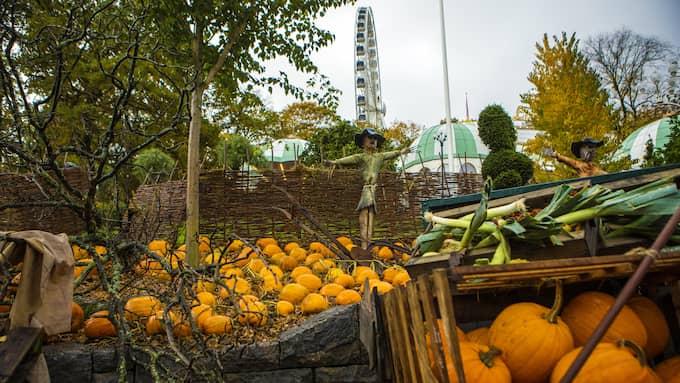 Halloween på Liseberg hade premiär 2015 och sedan dess har satsningen växt. Foto: HENRIK JANSSON