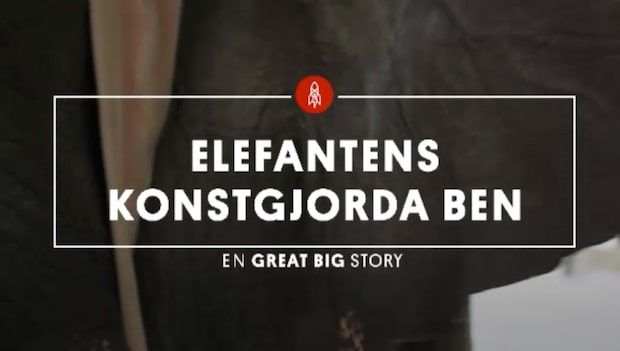 Han opererade elefanten för 15 år sedan - reaktionen när de ses igen är så fin