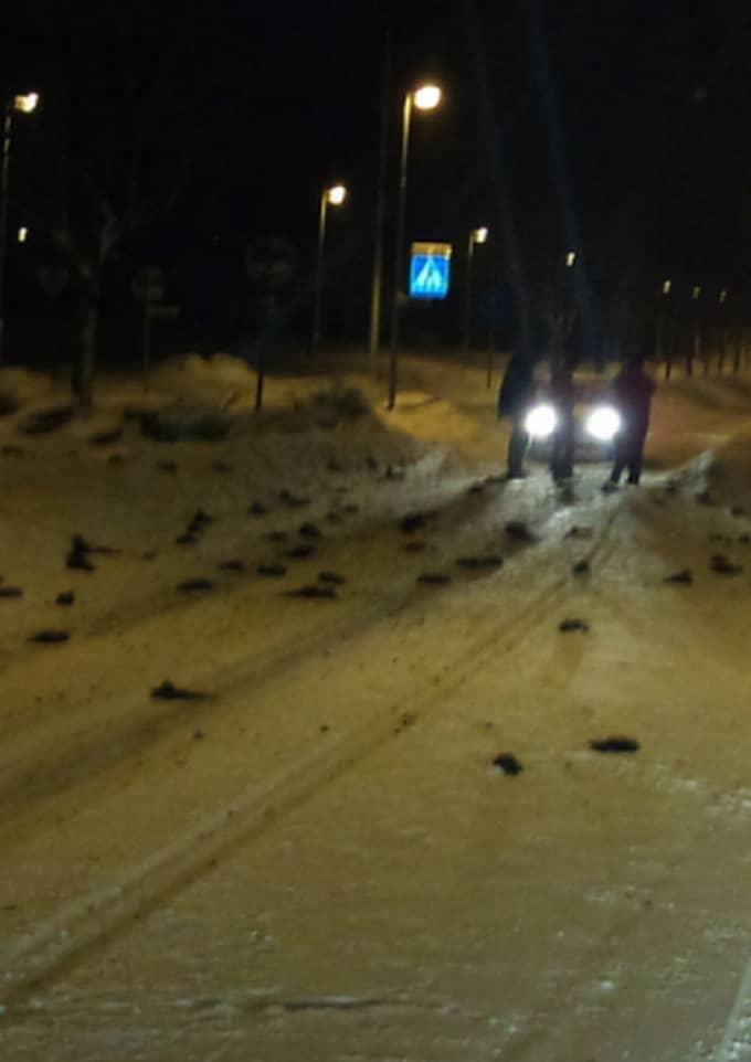 Hundratals fåglar föll döda ner från himlen i Falköping. Foto: Läsarbild