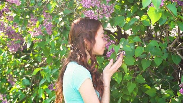 Blommande buskar - fem fina val till din trädgård