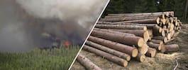 Dubbelsmäll för skogsägarna  i år - kan förlora miljonbelopp