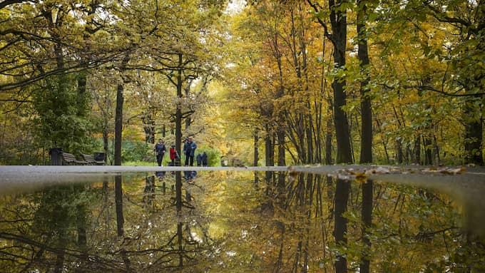 Den kyliga hösten sätts på paus under några dagar. Foto: ALEXANDER ZEMLIANICHENKO / AP TT NYHETSBYRÅN