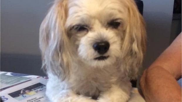 Carin, 79, blev biten av hund – dog dagar senare