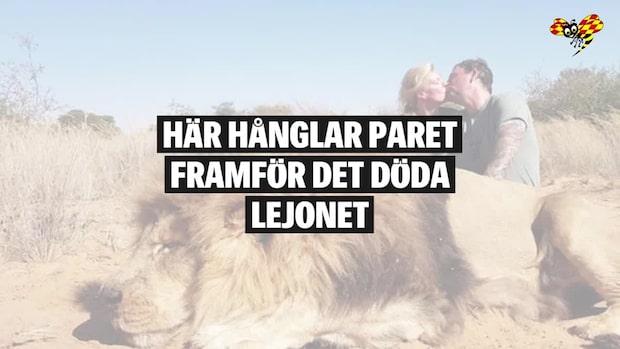Paret hånglar framför döda lejonet