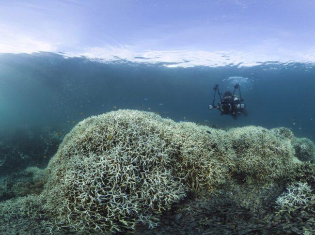 <span>Så här färglöst ser det ut utanför Lizard Island vid Stora Barriärrevet.</span>  <span>FOTO: XL Catlin Seaview Survey</span>
