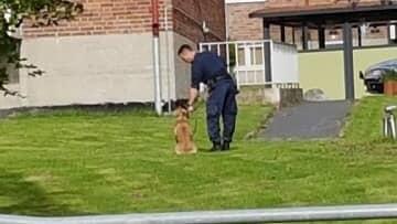Polisen har hundar till hjälp i jakten på en man som misstänks för mordförsök i Kallebäck. Foto: LÄSARBILD