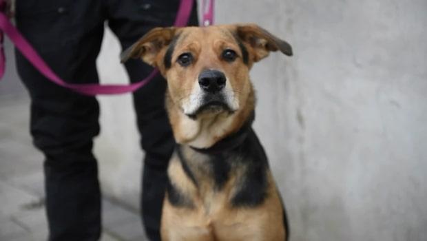 Här är polisens nya grepp: Hundar ska nosa upp bovar