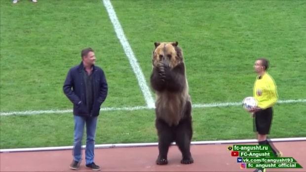 Fotbollslagets maskot - en livs levande björn