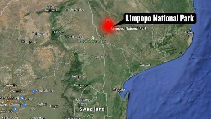 Dramat utspelade sig i Limpopo National Park i Moçambique.