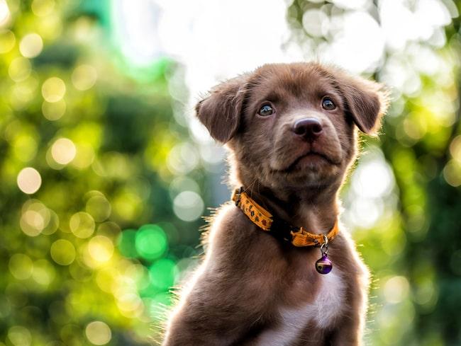 Är du sugen på att skaffa hund? Gör testet som hjälper dig att välja rätt när det är dags att köpa hund.
