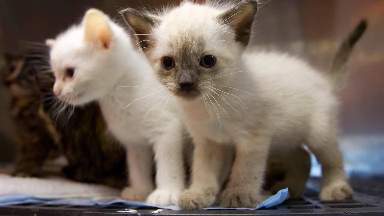Kattunge hittades  i en soptunna