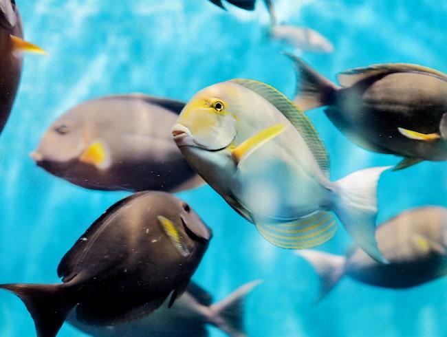 Kolla in undervattenslivet på Phuket Aquarium.