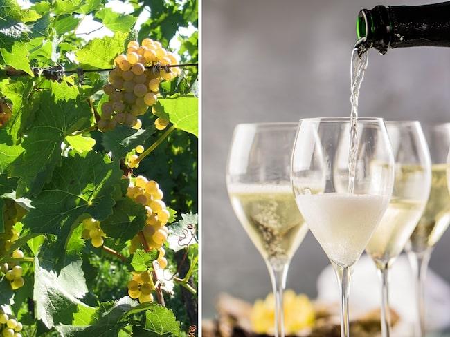 Chenin blanc-druvan är en mångsidig druva som ger allt från torra och söta till mousserande viner.