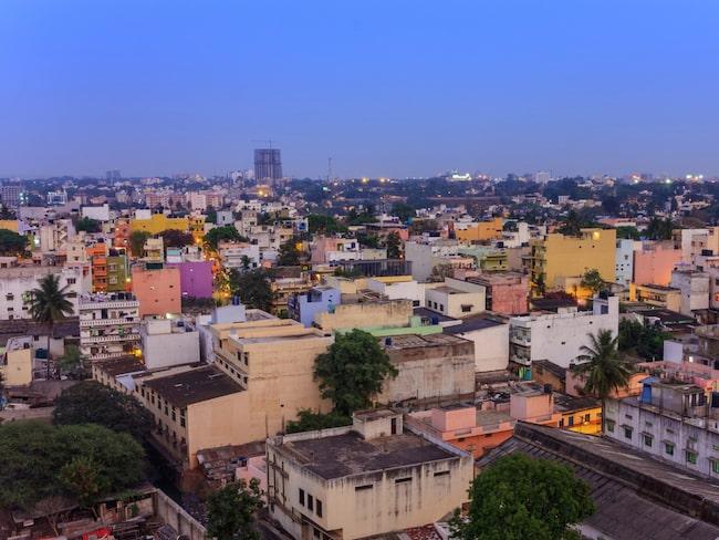 Den herrelösa tiken strök omkring på gatorna i den indiska staden Bangalore.