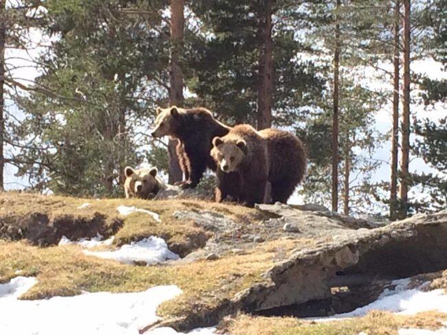 I köpet ingår bland annat björnar...