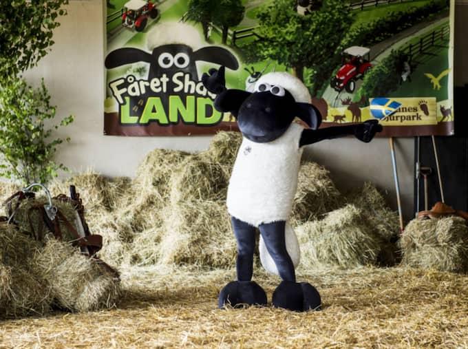 Den 18:e juni flyttar Tv-kändisen och barnens favorit Fåret Shaun och hans vänner in på Skånes djurpark. Foto: Christian Örnberg