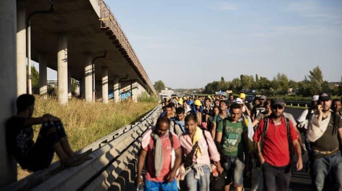 Bilden visar när tusentals flyktingar under förra veckan vandrade från Budapest till gränsen mot Österrike. Foto: Lisa Mattisson