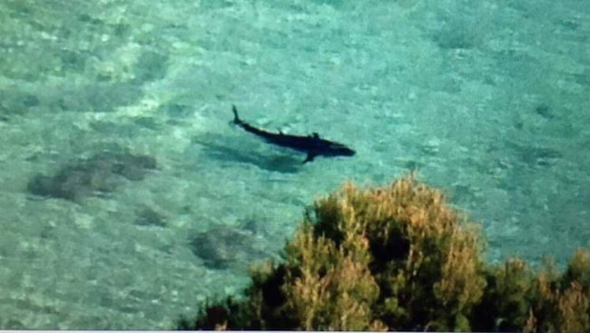 Vissa hävdar att det är en vithaj som synts utanför Mallorcas kust, medan andra tror att det kan handla om en tonfisk.