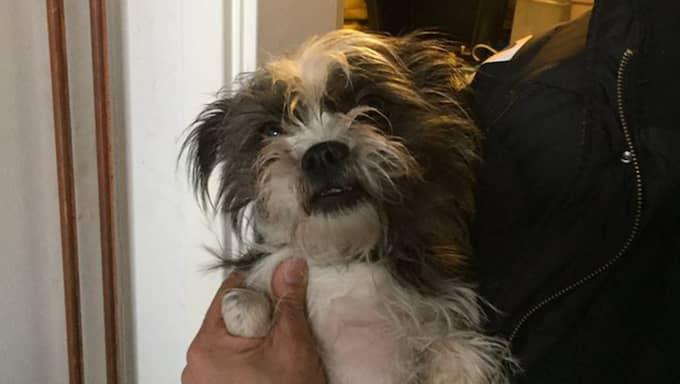 Uppmärksamma resenärer förstod att hunden Doris saknade sin ägare på tåget och en polispatrull larmades till stationen. Doriskunde senare återförenas med sin ägare. Foto: Privat