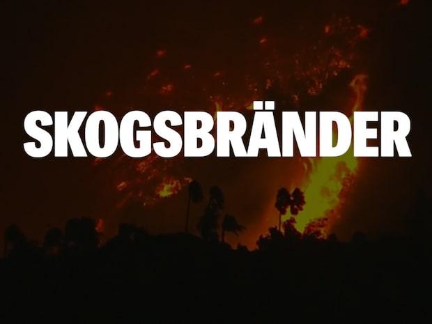 Så vanligt är det med skogsbränder i Sverige