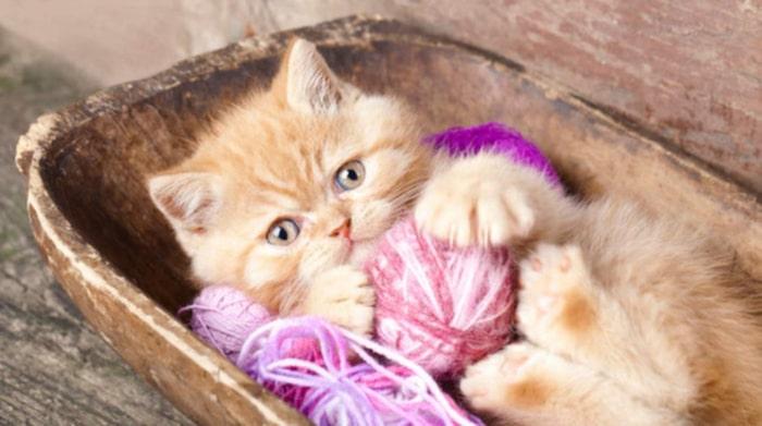 kan katter bli förkylda